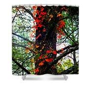 Garland of Autumn Shower Curtain by KAREN WILES