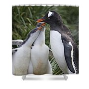 Gentoo Penguin Parent And Two Chicks Shower Curtain by Suzi Eszterhas