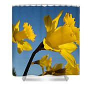 Glowing Yellow Daffodil Flowers Art Prints Spring Shower Curtain by Baslee Troutman