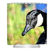 Goose Art Shower Curtain by Karol Livote