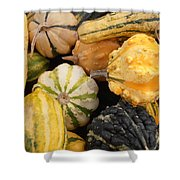 Gourds Shower Curtain by Kimberly Perry
