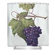 Grapes  Shower Curtain by Margaret Ann Eden