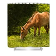 Grazing Horse Shower Curtain by Charuhas Images