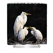 Great Egret In Nest With Young Shower Curtain by Natural Selection David Ponton