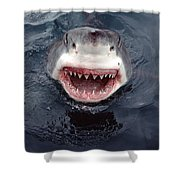 Great White Shark Smile Australia Shower Curtain by Mike Parry