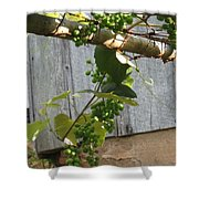Green Grapes On Rusted Arbor Shower Curtain by Deb Martin-Webster