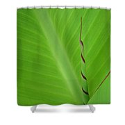 Green Leaf With Spiral New Growth Shower Curtain by Nikki Marie Smith