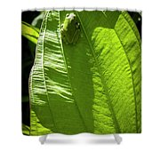 Green on Green Shower Curtain by Albert Seger