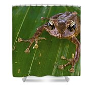 Ground Frog Nakanai Mts Papua New Guinea Shower Curtain by Piotr Naskrecki