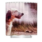 Handsome Hunter. English Setter Shower Curtain by Jenny Rainbow