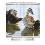 Hanging With The Buds Shower Curtain by Deborah Benoit
