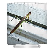 Heading Out Shower Curtain by Lisa  Phillips