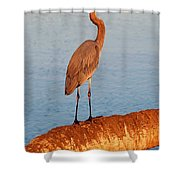 Heron On Palm Shower Curtain by David Lee Thompson