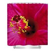 Hibiscus Macro Shower Curtain by Joe Carini - Printscapes