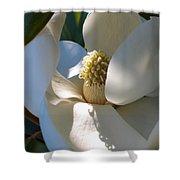 Hidden Magnolia Shower Curtain by Carol Groenen
