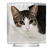Hiding In The Bath Tub Shower Curtain by Andee Design
