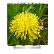 Honey Bee Full Of Pollen Shower Curtain by Renee Trenholm