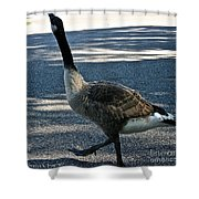 Honk And Strut Shower Curtain by Susan Herber