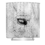 Horse Eye Shower Curtain by Darren Fisher