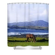 Horse Grazing In A Field, Beara Shower Curtain by The Irish Image Collection