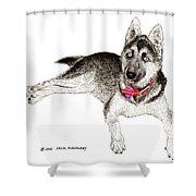 Husky With Blue Eyes And Red Collar Shower Curtain by Jack Pumphrey