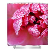 Icy rose Shower Curtain by Elena Elisseeva