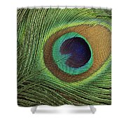 Indian Peafowl Pavo Cristatus Display Shower Curtain by Gerry Ellis