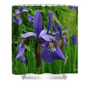 Irises Shower Curtain by Randi Shenkman