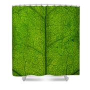 Ivy Leaf Shower Curtain by Steve Gadomski