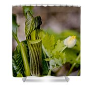 Jack and Rose together again Shower Curtain by LeeAnn McLaneGoetz McLaneGoetzStudioLLCcom