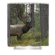 Jasper National Park, Jasper, Alberta Shower Curtain by Philippe Widling