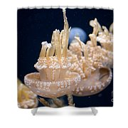 Jellies Shower Curtain by Carol Ailles
