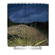 Komodo Dragon Varanus Komodoensis Shower Curtain by Cyril Ruoso