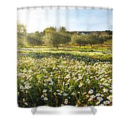 Landscape With Daisies Shower Curtain by Carlos Caetano