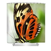 Large Tiger Butterfly Shower Curtain by Elena Elisseeva