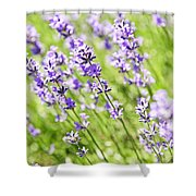 Lavender In Sunshine Shower Curtain by Elena Elisseeva