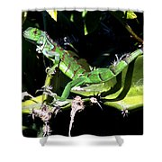 Leapin Lizards Shower Curtain by Karen Wiles