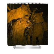 Lions At Night Shower Curtain by Carson Ganci