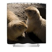 Little Dogs On The Prairie Shower Curtain by Trish Tritz
