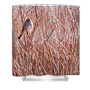 Little Sparrow Shower Curtain by Sabrina L Ryan