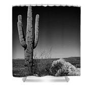 Lone Saguaro Shower Curtain by Chad Dutson