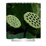 Lotus Capsules-sun Worshipers Dl052 Shower Curtain by Gerry Gantt