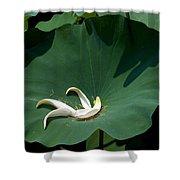 Lotus Leaf--castoff IIi Dl060 Shower Curtain by Gerry Gantt
