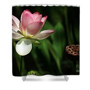 Lotus Opening To The Sun Shower Curtain by Sabrina L Ryan