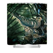 Love A Dove Dove Shower Curtain by Chris Lord