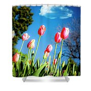 Lucy in the Sky Shower Curtain by Tamyra Ayles