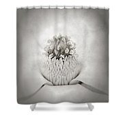 Magnolia 1 Shower Curtain by Rich Franco