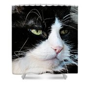 Maine Coon Face Shower Curtain by Michelle Milano