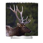 Male Elk Cervus Canadensis Shower Curtain by Richard Wear