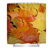 Maple Rainbow Shower Curtain by Ausra Paulauskaite